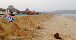 Beach residents of Goa